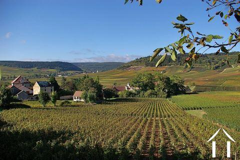Burgund information